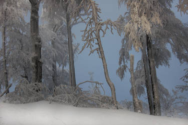 winter-tale forest by greatbelow2