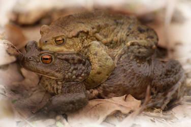 Frog lovers... by greatbelow2