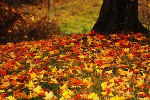 Underneath the tree by Raychilwls