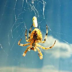 Spider's Net by xergic