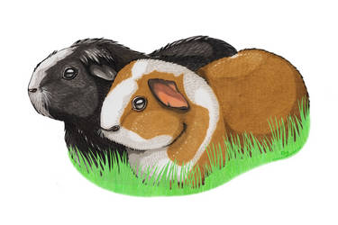 Commission - Guinea pigs by Sashiryuu