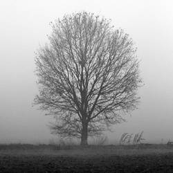 The tree and the mist by d1s4st3r