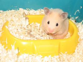 Klara the Hamster by ljusa