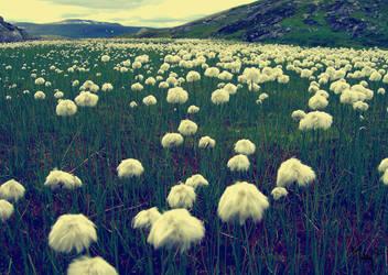 Marsh Cotton by Maliny