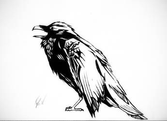 Raven Drawing With Marker and Pen by Flight-Level