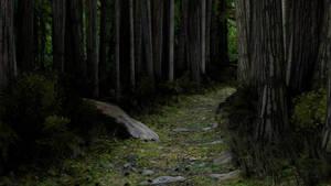 Woodland Path by Berandas