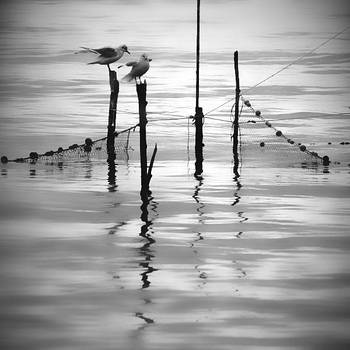 equilibrium by m-lucia