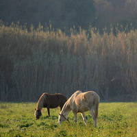 two horses... by m-lucia