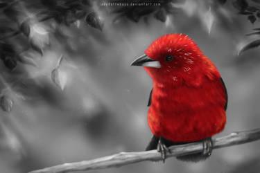 Birdie by LadyDattebayo