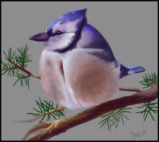 bluejay by nastenka