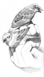 sparrows by nastenka
