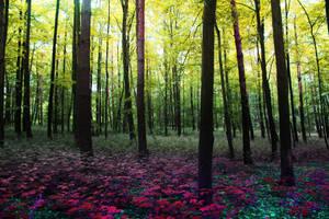 breathtaking by paulchen11