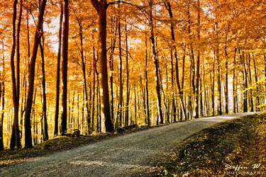 endless autumn by paulchen11