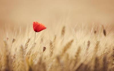 Summer Love by paulchen11