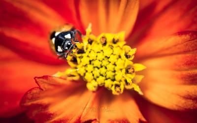 oh honey by paulchen11