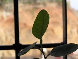 Lime Leaf by Halycon-Thanatos