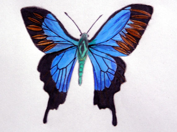 Butterfly by Halycon-Thanatos