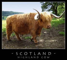 Scotland - Cow by dark-spider