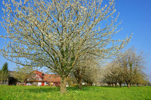 Spring in Thurgau by ErwinStreit