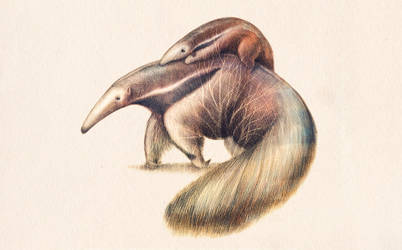 Ant-eater by e-d-u-r-n-e