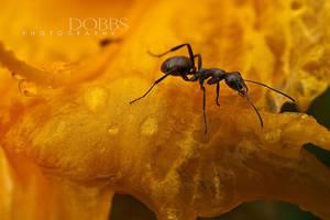 Ant on Orange by leavenotrase