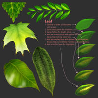 Leaf Tutorial by kangghee