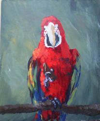 Parrot by drwhofan