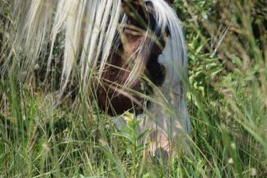 Chincoteague pony by Aponi06
