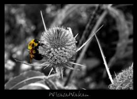 2tone bee by WicasaWakan