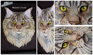 3D - Portraits: Maine Coon by SaQe