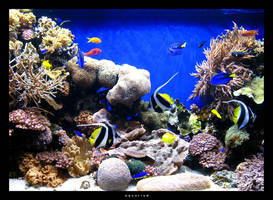 aquarium by uncherished