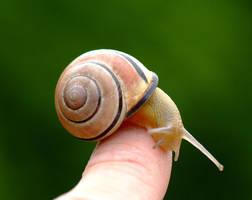 snail on my finger by vw1956stock