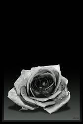 desert rose by -bot-