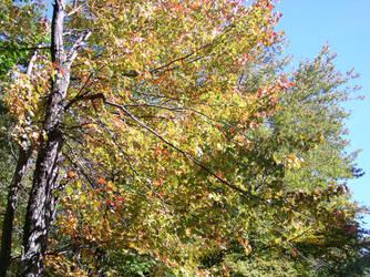 October Foliage by Ceridweyn