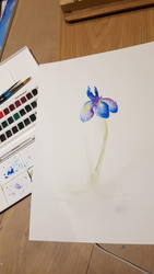 Iris - watercolour painting by Crownverry