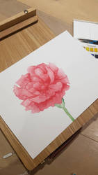 Carnation - watercolour painting by Crownverry