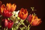Einige Tulpen by Lokipan