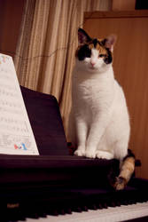 Piano Perch by wackymanda