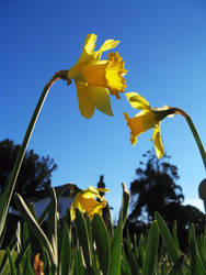 Spring Arrives by wackymanda