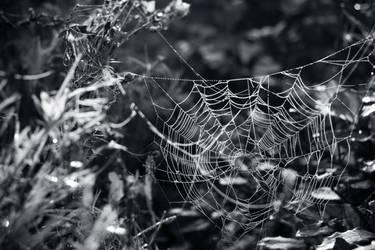 Spider's Web by wackymanda
