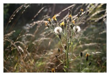 Meadow Flower by wackymanda