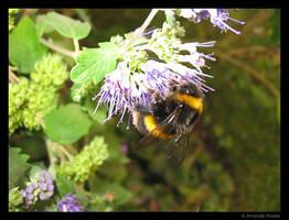 Busy Bee 2 by wackymanda