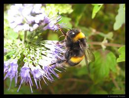 Busy Bee 3 by wackymanda