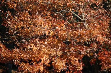 Autumn Wanderings by ArekkusuSan