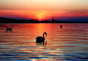 swan by diabol