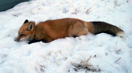 Snow sticks by foxalbiazul