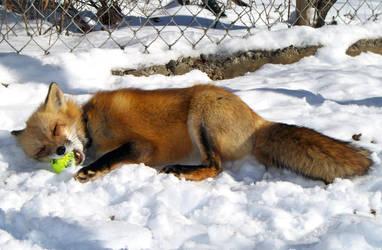 Omnoms make the wurld go round by foxalbiazul