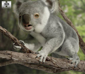 Koala by humster3d