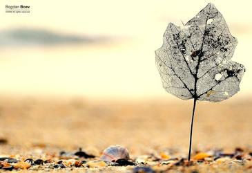 The Leaf by BogdanBoev