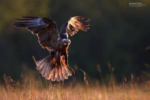 Sunset Hovering by BogdanBoev